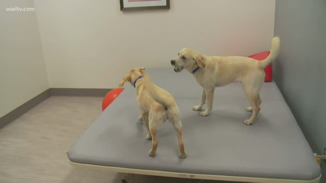Service dogs help people with disabilities