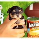 Dug Up at Dogster: Interview with Dog: Impossible's Dog Behaviorist Matt Beisner