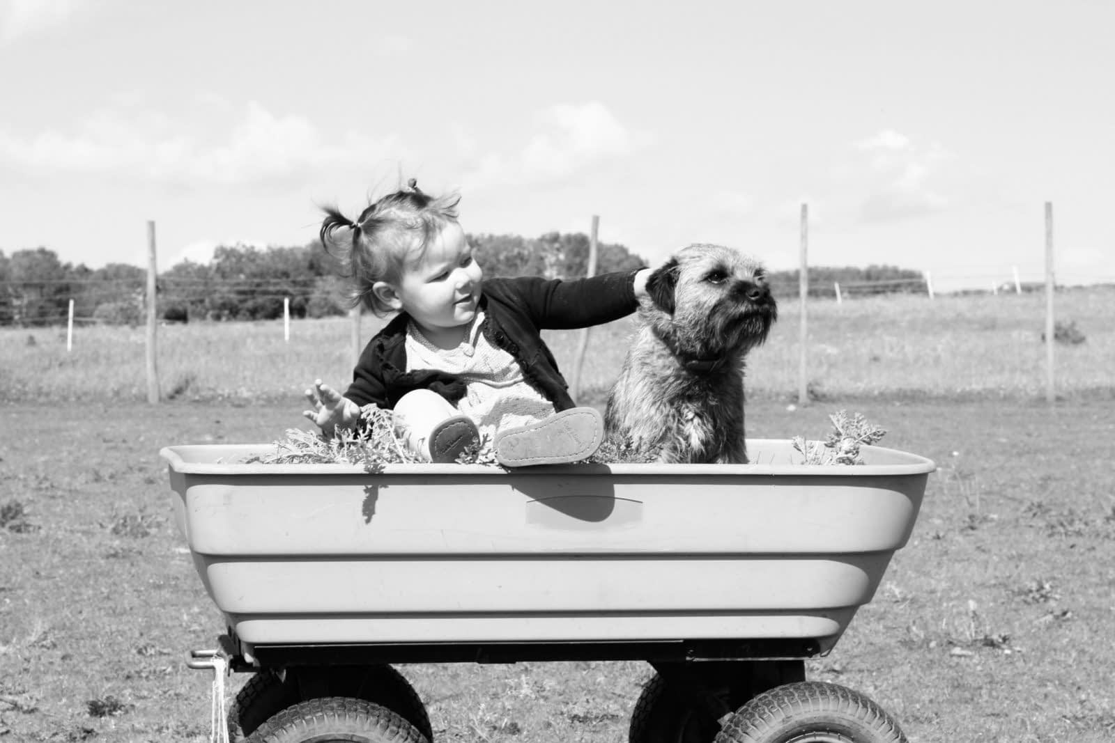 Best Dog Breeds for Kids with Allergies