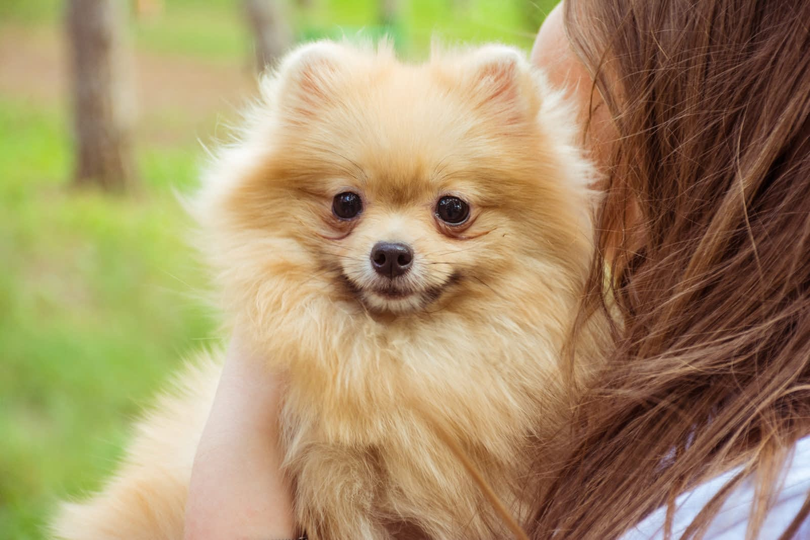 Teacup Puppies for sale in Oregon, OR
