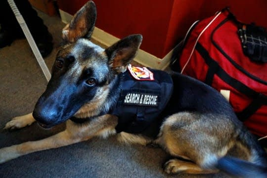 Therapy dogs complete training, join Columbus Police
