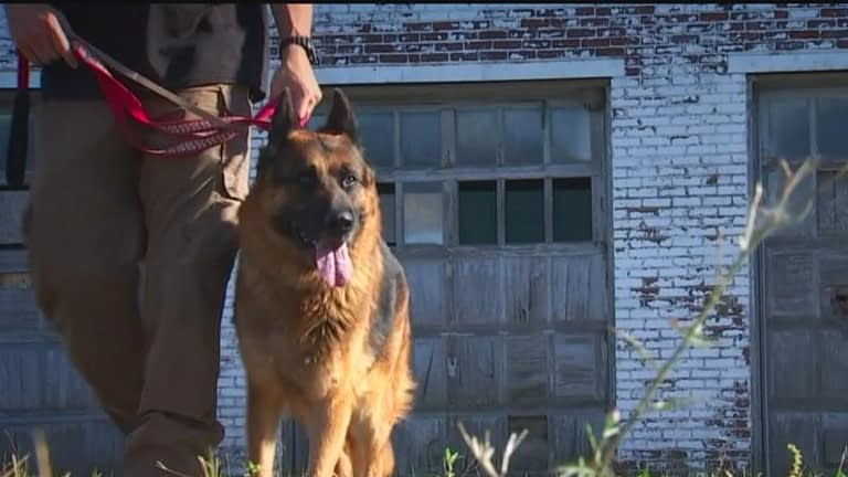 Dog trainer saves dog from being euthanized