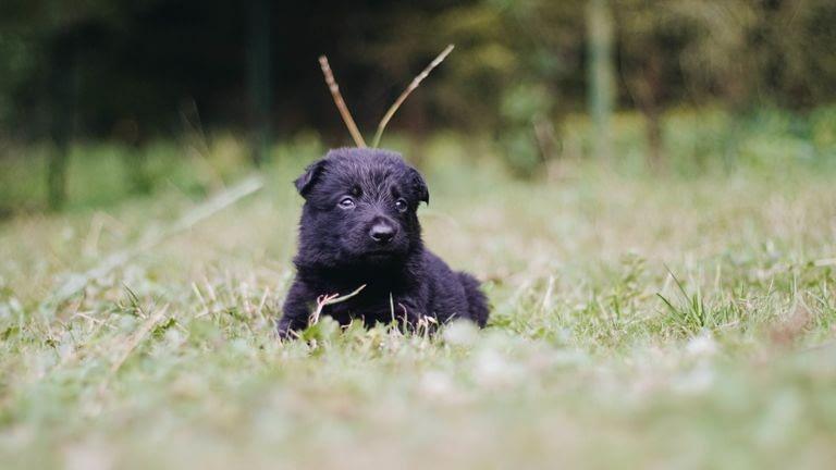 Teacup Puppies for sale in Nebraska, NE