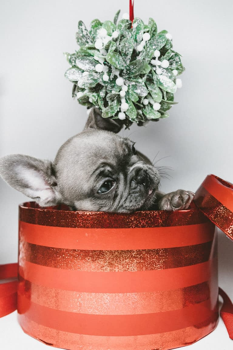 Teacup Puppies for sale in Florida, FL